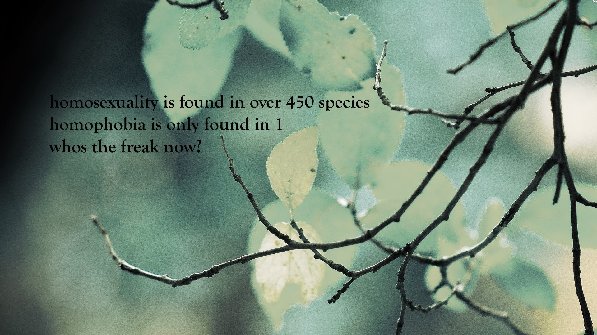 Quotes Nature Funny Minimalistic Nature Quotes Text Wallpaper  Allwallpaper.in
