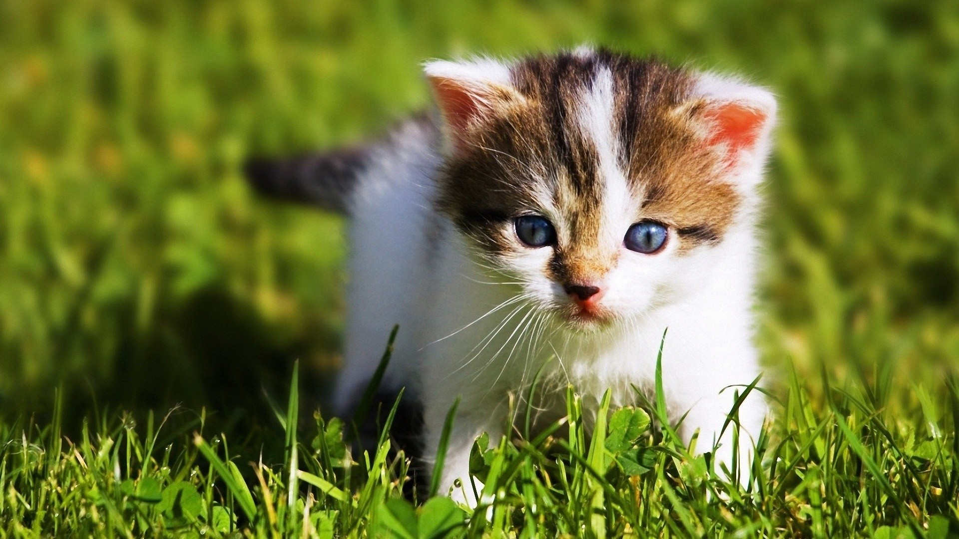 animals baby kittens wallpaper | allwallpaper.in #4598 | pc | en