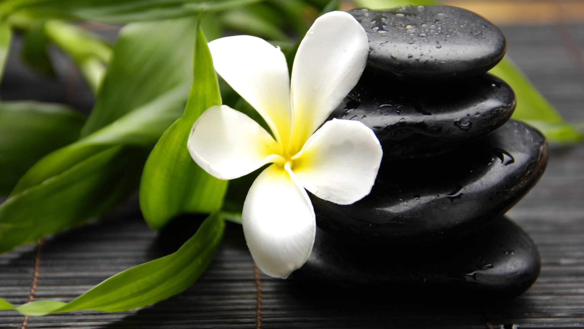 flowers leaves stones plumeria wallpaper allwallpaperin