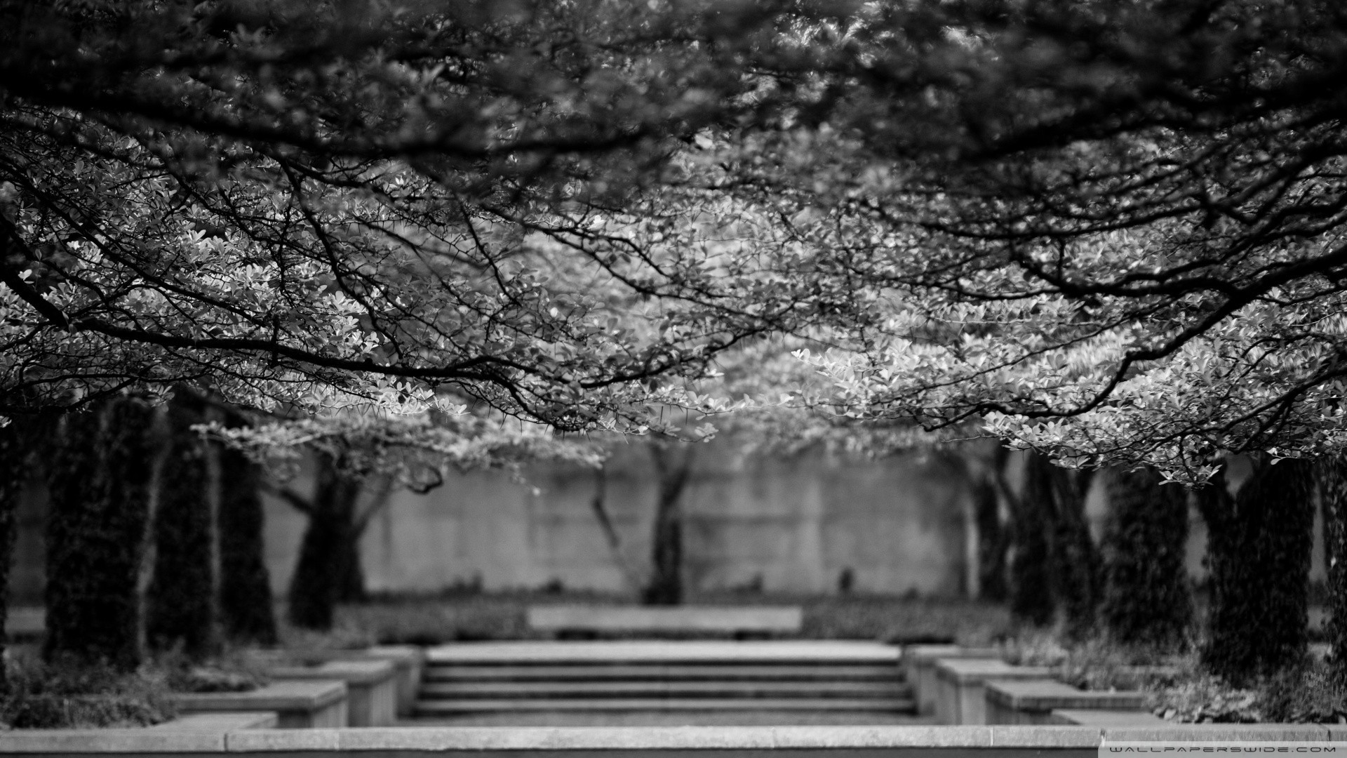 Black and white nature trees wallpaper | AllWallpaper.in ...