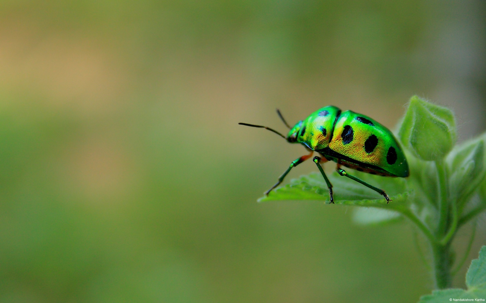Nature insects leaves beetles wallpaper | AllWallpaper.in ...