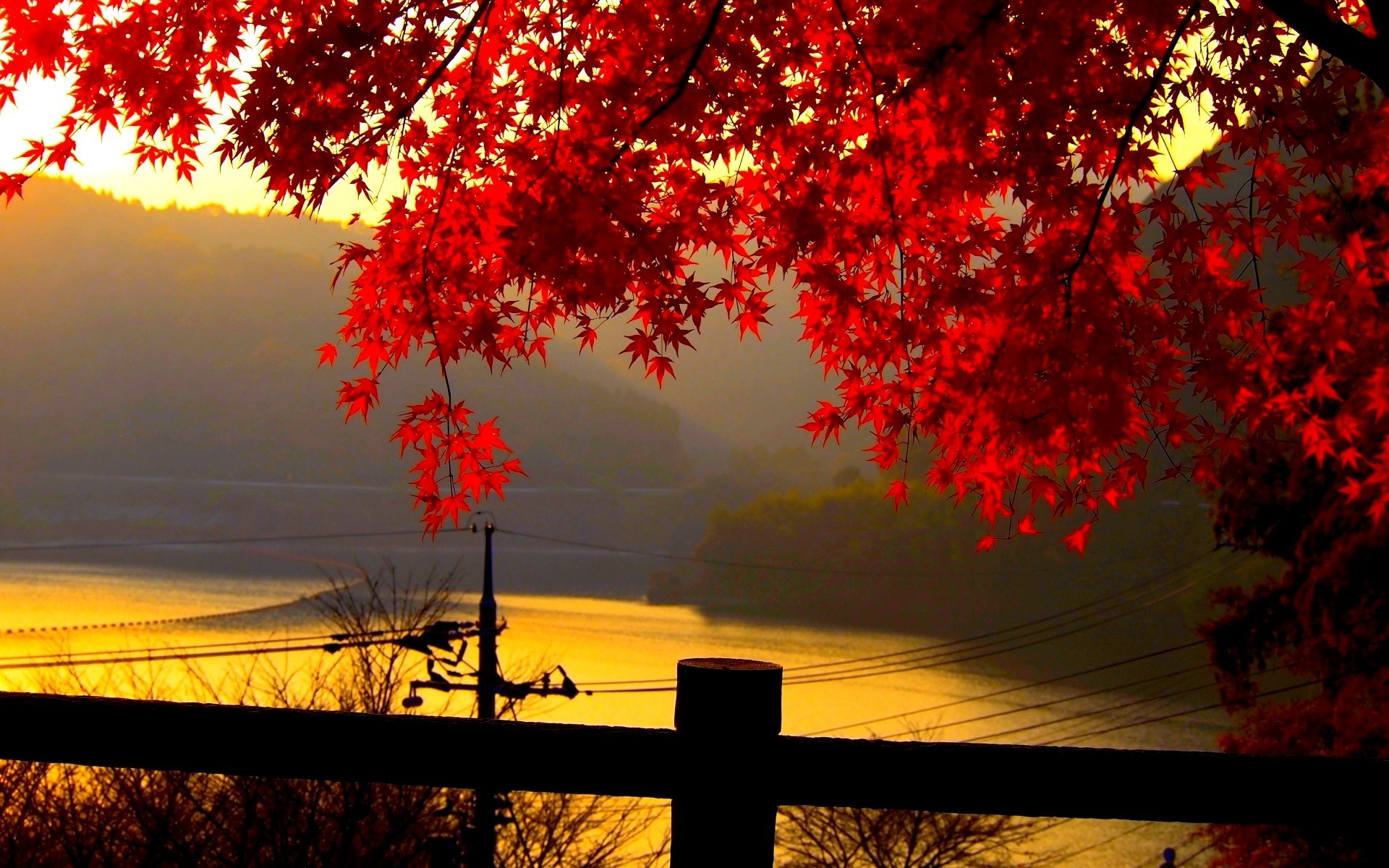 Red autumn leaves at dusk wallpaper allwallpaper 1619 pc en red autumn leaves at dusk wallpaper voltagebd Image collections