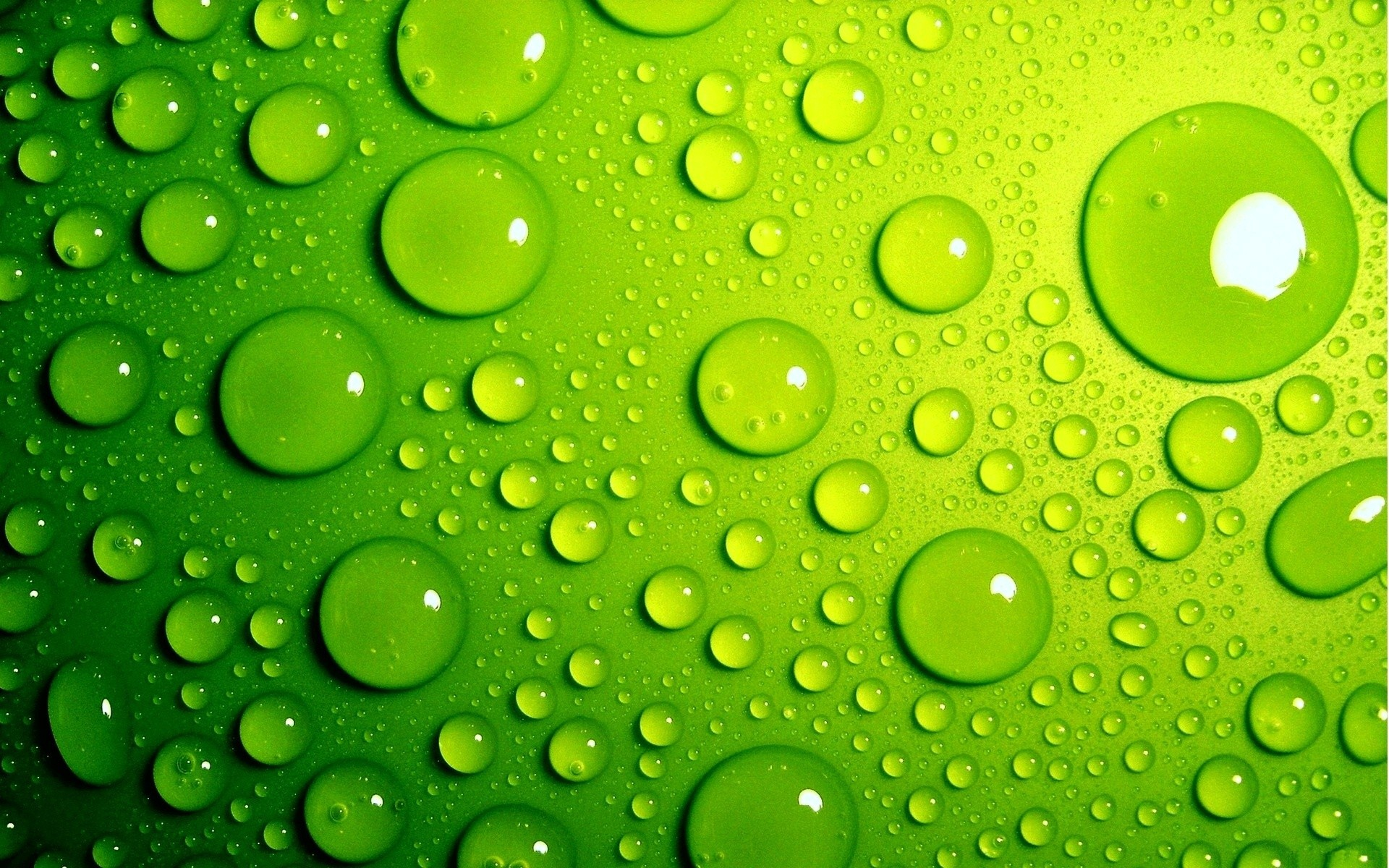 Fresh Green Backgrounds Wallpaper