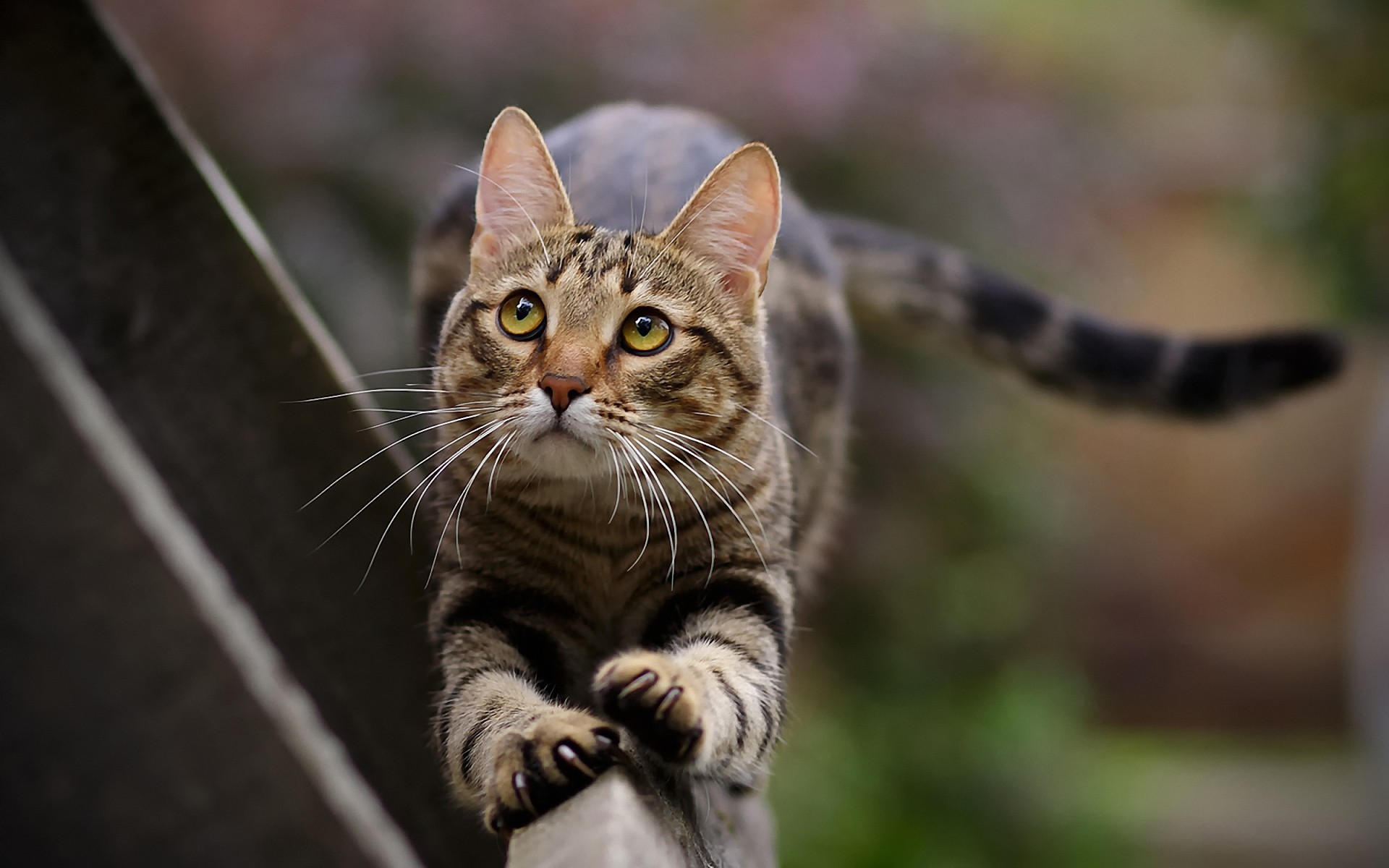 Animals Cat Paws Cats Pets Tails Wallpaper Allwallpaper In 4081