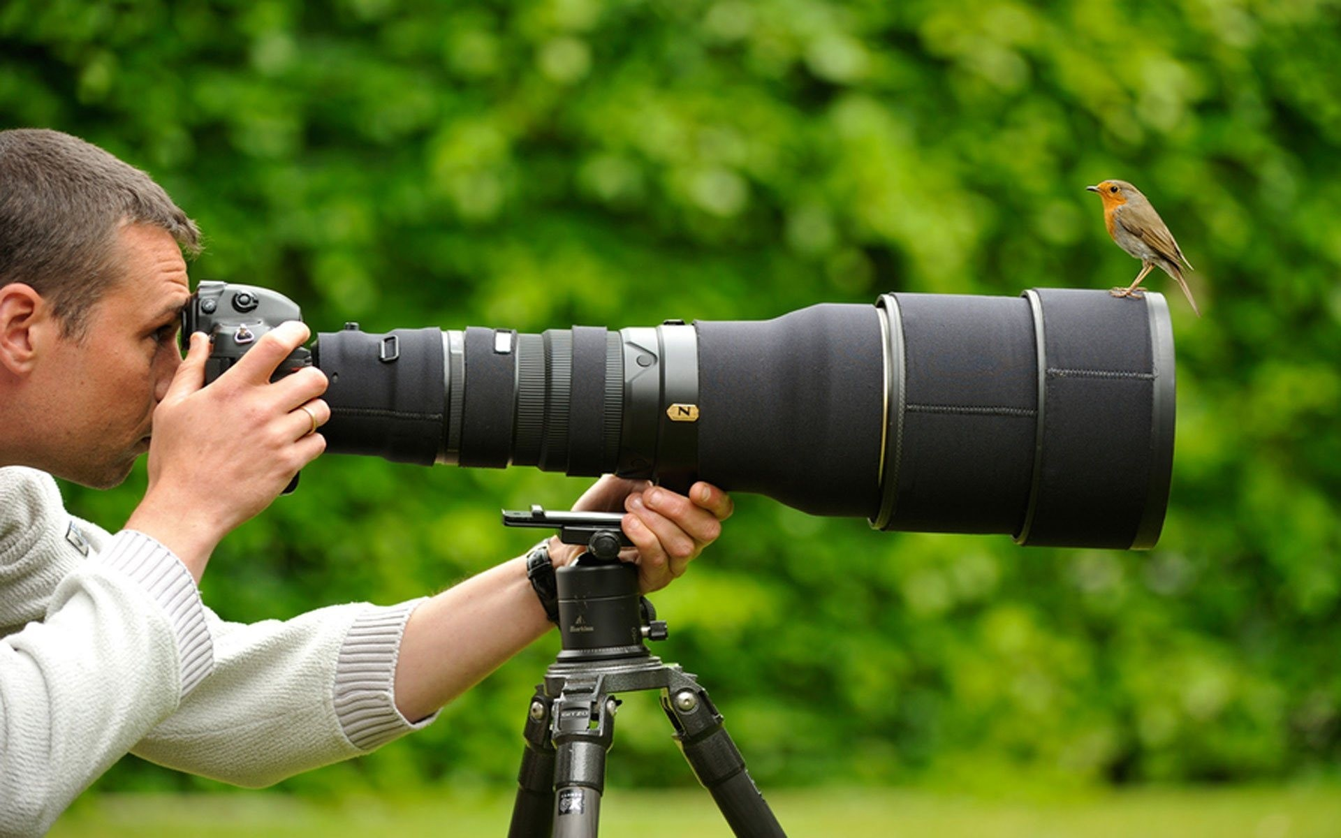 Best Nikon Cameras For Nature Photography