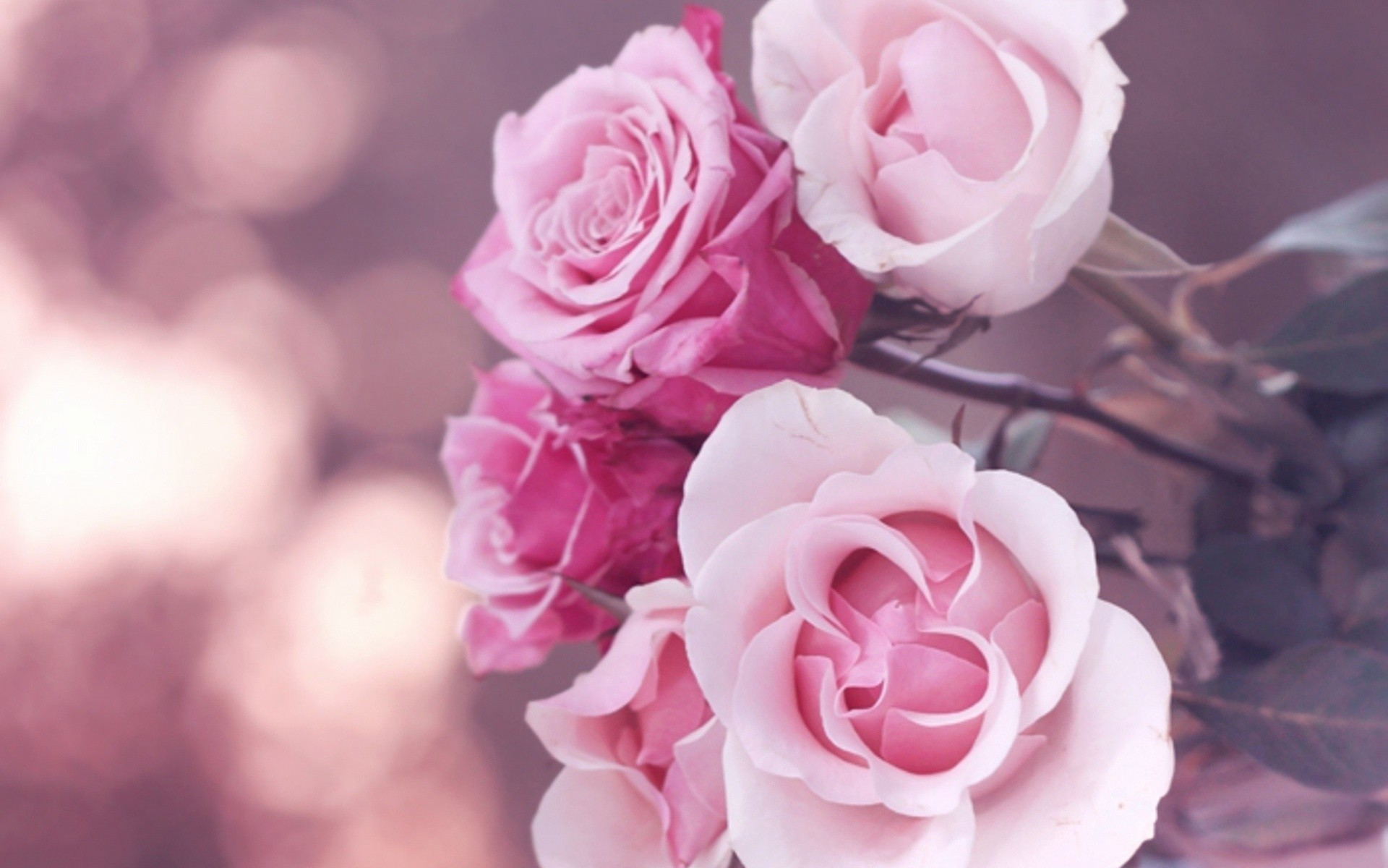 Flowers Roses Pink Rose Wallpaper Allwallpaper In 6809 Pc En