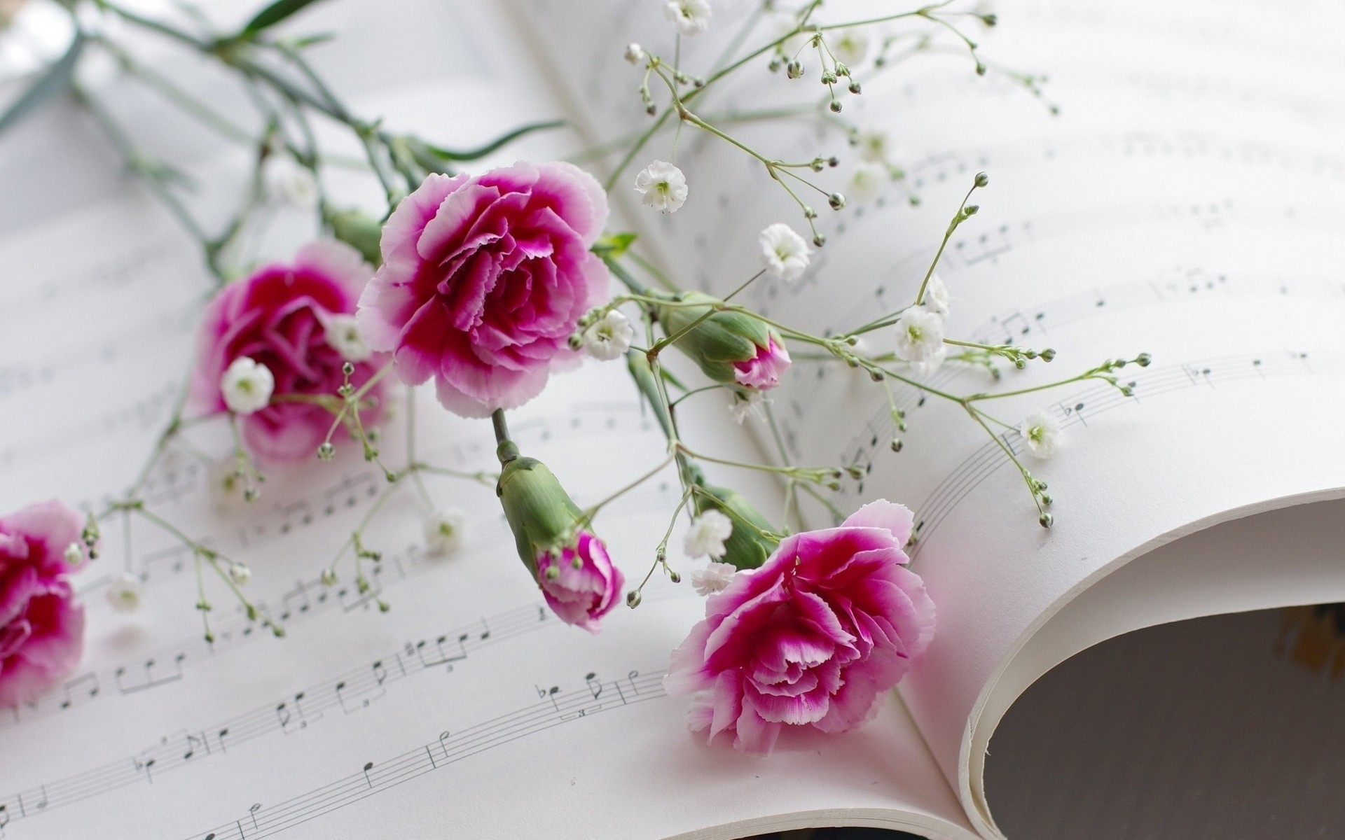 Pink flowers and music wallpaper allwallpaper 7114 pc en pink flowers and music wallpaper mightylinksfo
