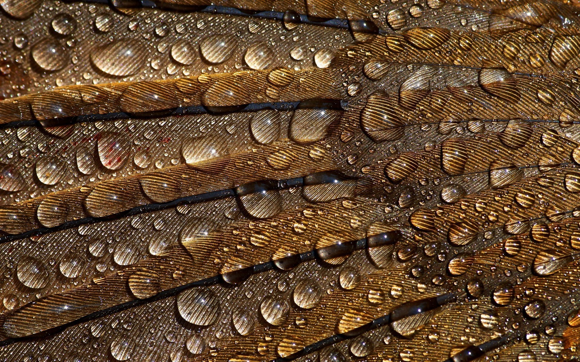 Wallpaper for your iphone 320x480 hd peacock feather iphone wallpapers - Water Drops And Feathers Wallpaper Allwallpaper In 7291