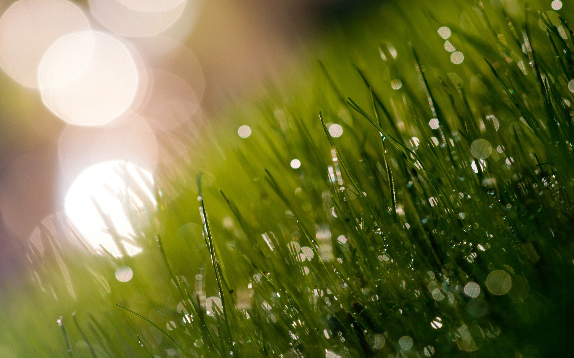 Drop Dew On The Grass Nature Background Stock Photo Image of