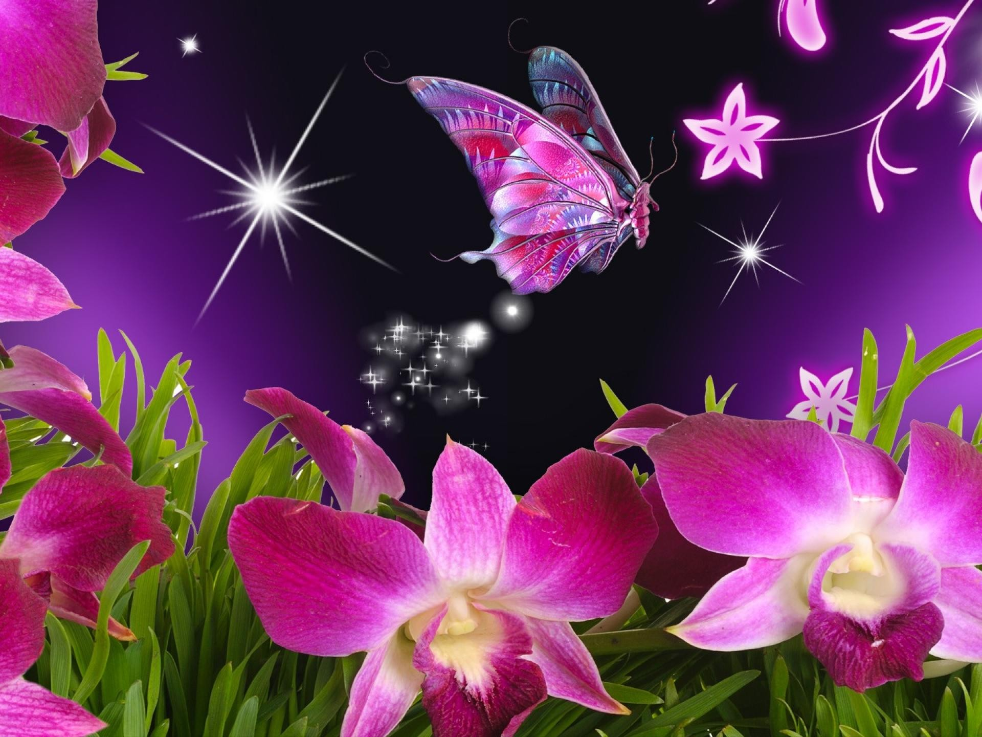 Wallpaper orchidee steine  Orchideen und Schmetterling für Monarchen wallpaper | AllWallpaper ...