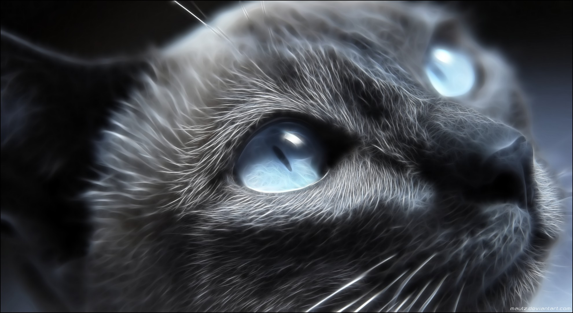 Eyes Cats Blue Animals The Cat Wallpaper