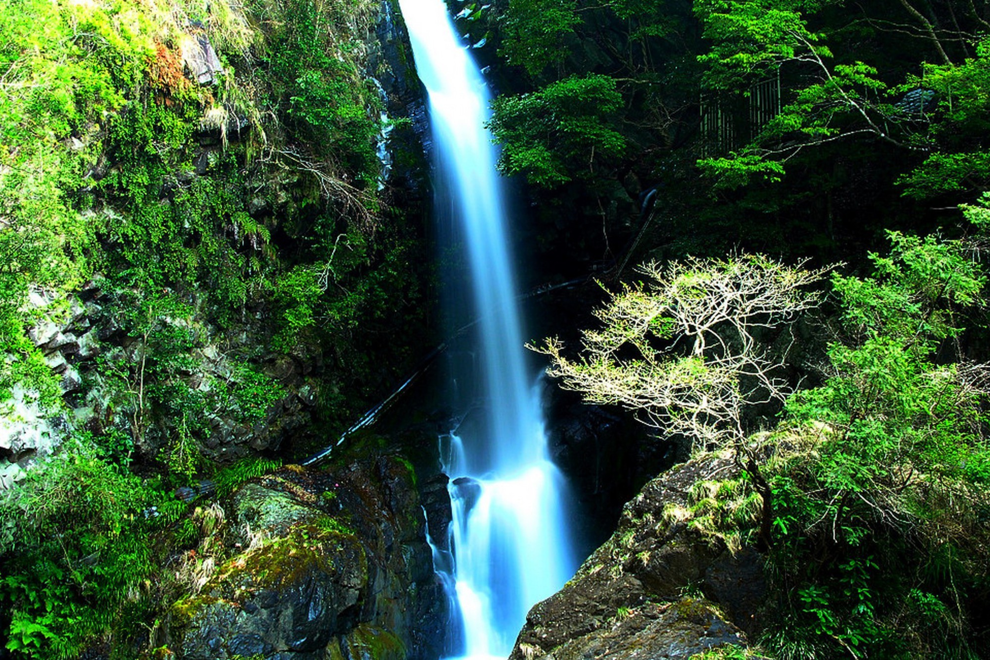 Japan nature forest waterfalls wallpaper - Nature japan wallpaper ...