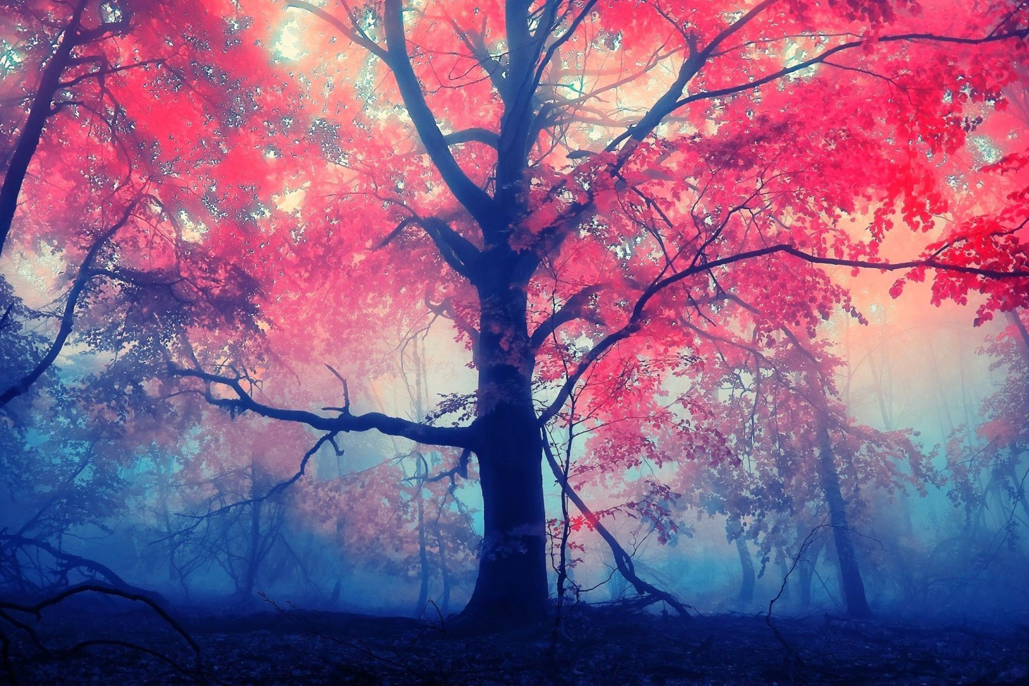 Red Autumn Tree Wallpaper