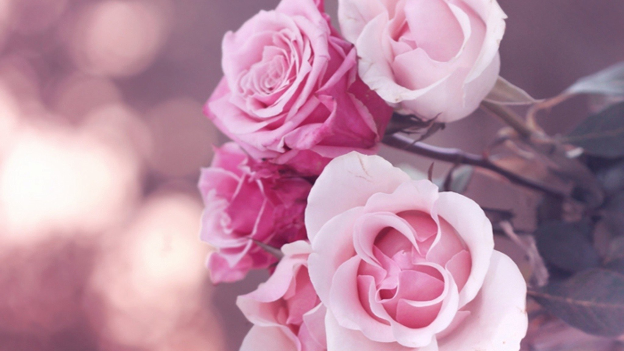 Flowers roses pink rose wallpaper 6809 - Pink rose hd wallpaper ...