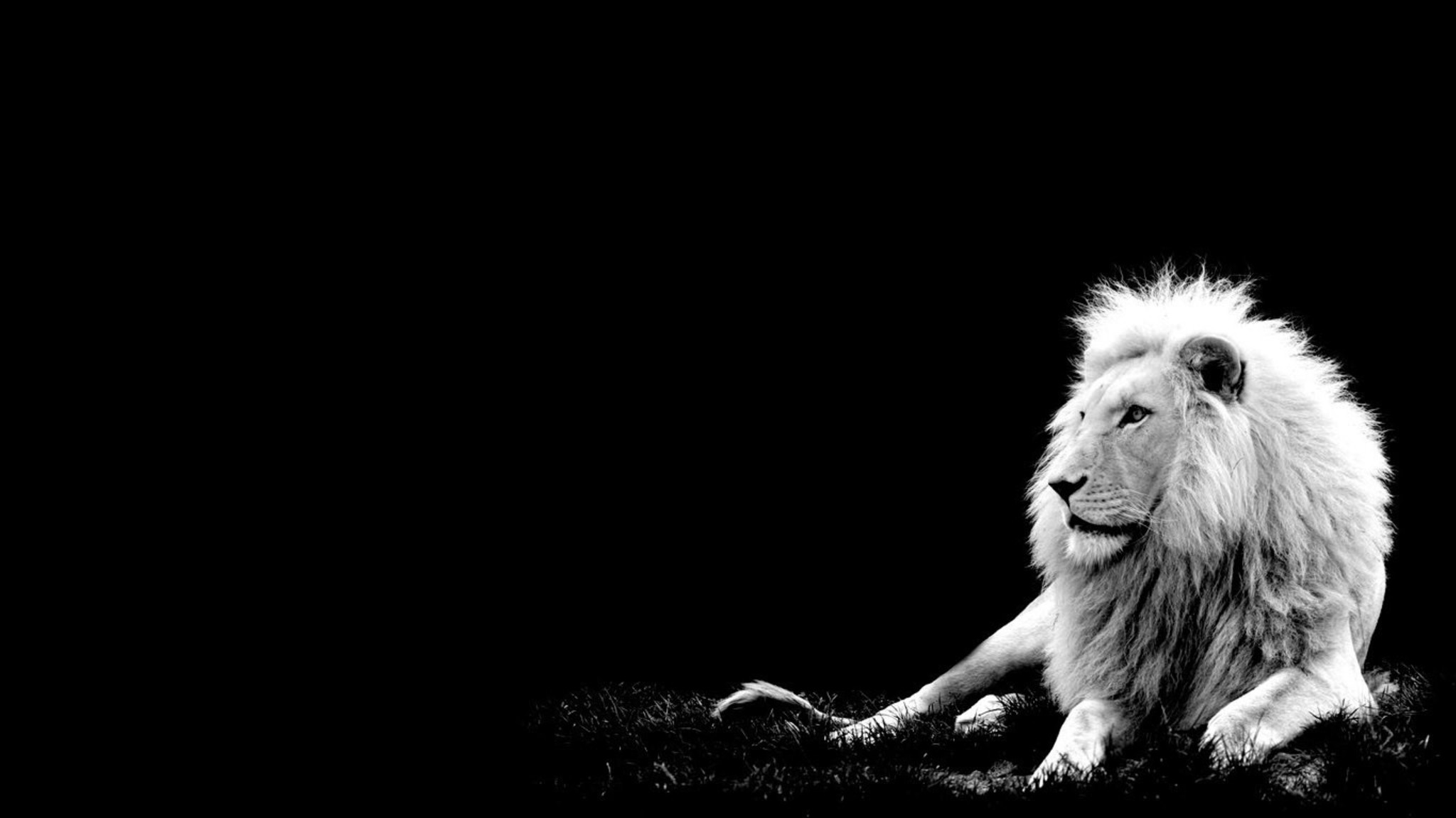 10 Latest Cool Wallpapers Of Animals Full Hd 1080p For Pc: Black And White Wallpaper