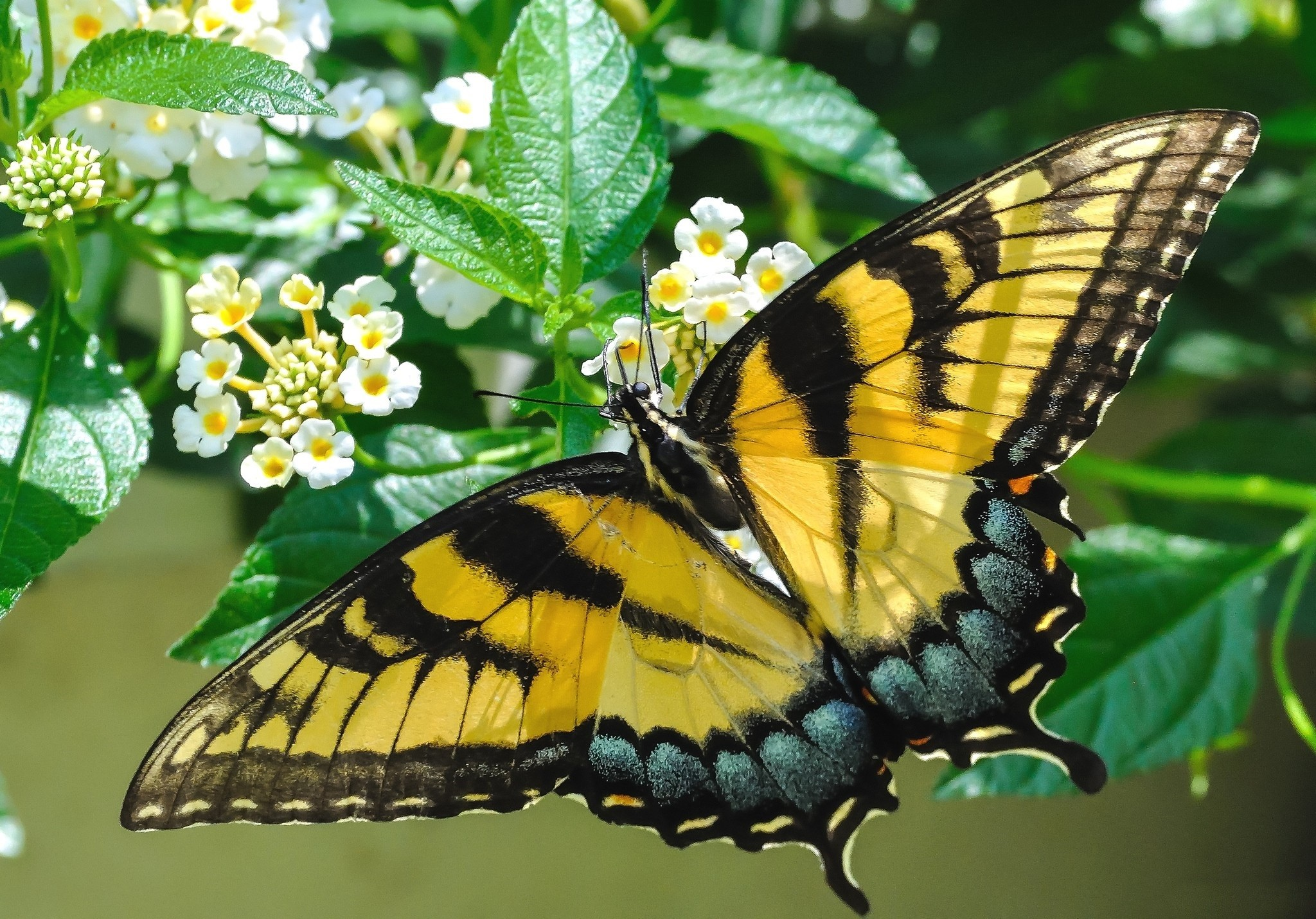 Beautiful Butterfly Wallpaper Allwallpaper In 9547 Pc En