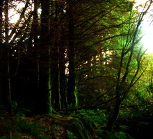 Shrouded forest HD wallpaper