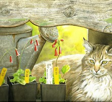 Cat on the potting bench HD wallpaper