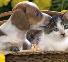 Pet love HD wallpaper