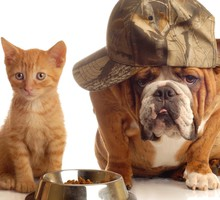 Tiere Bulldogge cats dogs Englisch  HD wallpaper