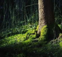 Green nature trees forest HD wallpaper
