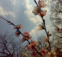 Branches flowers nature pink spring HD wallpaper