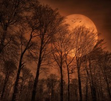 Moon nature red HD wallpaper