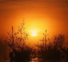 Early morning in the swamp HD wallpaper