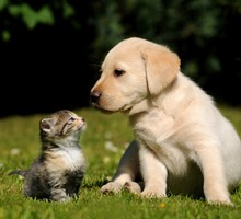 Nature cats animals dogs HD wallpaper