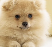 Animals dogs smiling HD wallpaper