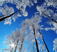 Forests winter HD wallpaper