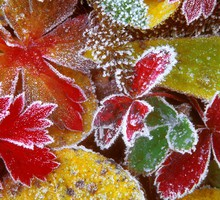 Forest leaves frosty HD wallpaper