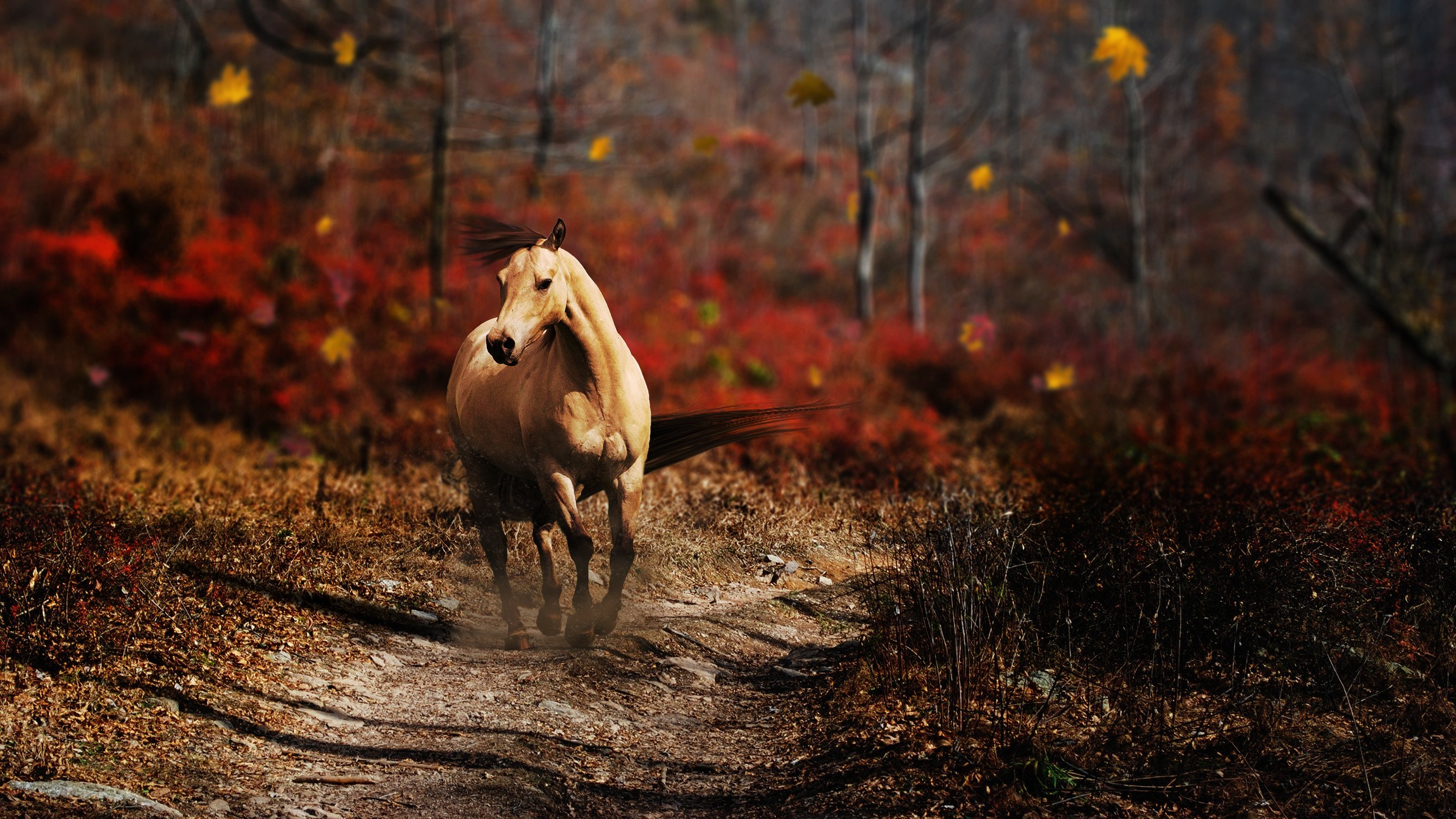 Nature Horses Wallpaper