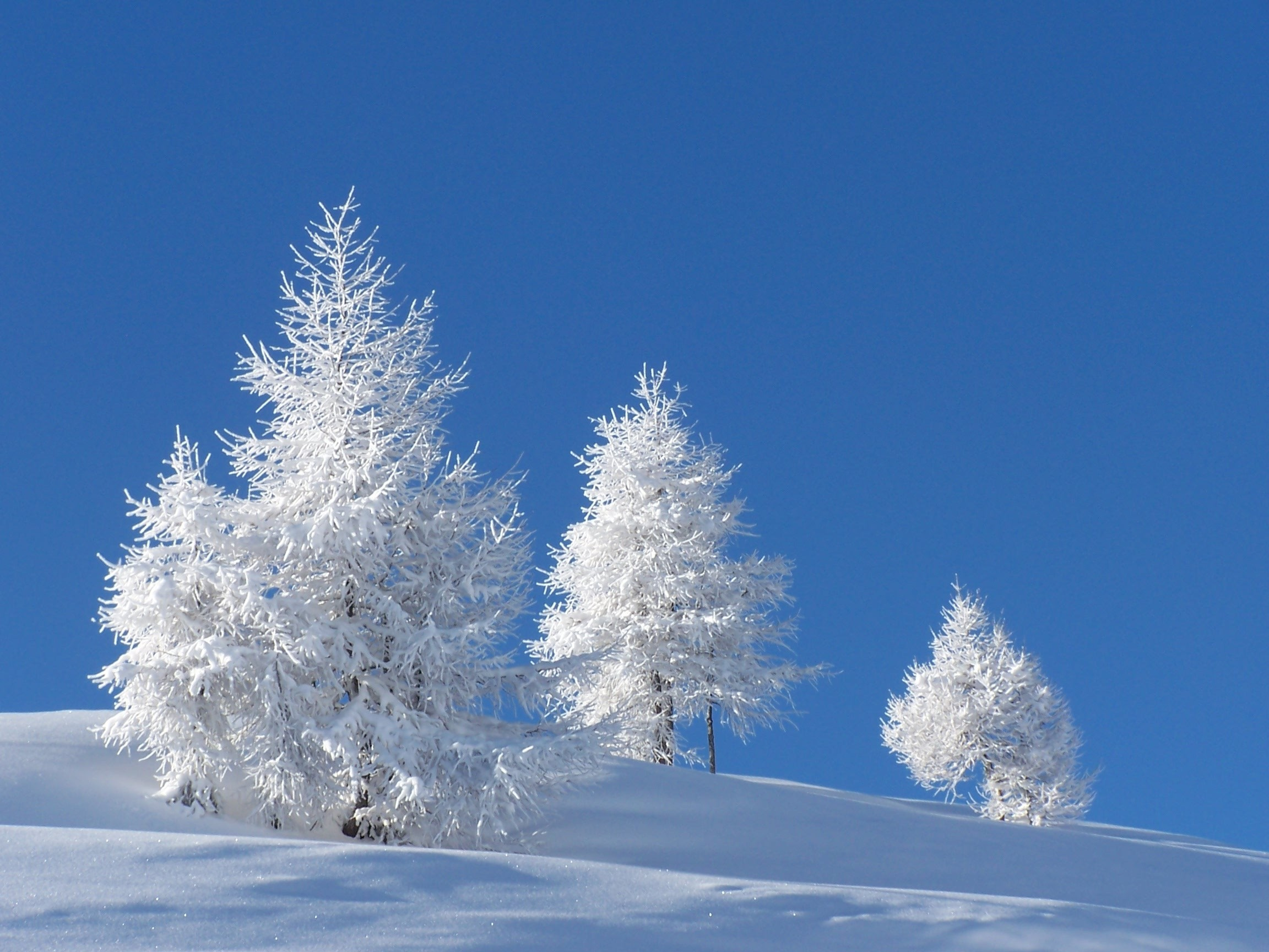 pin snow wallpapers trees - photo #15