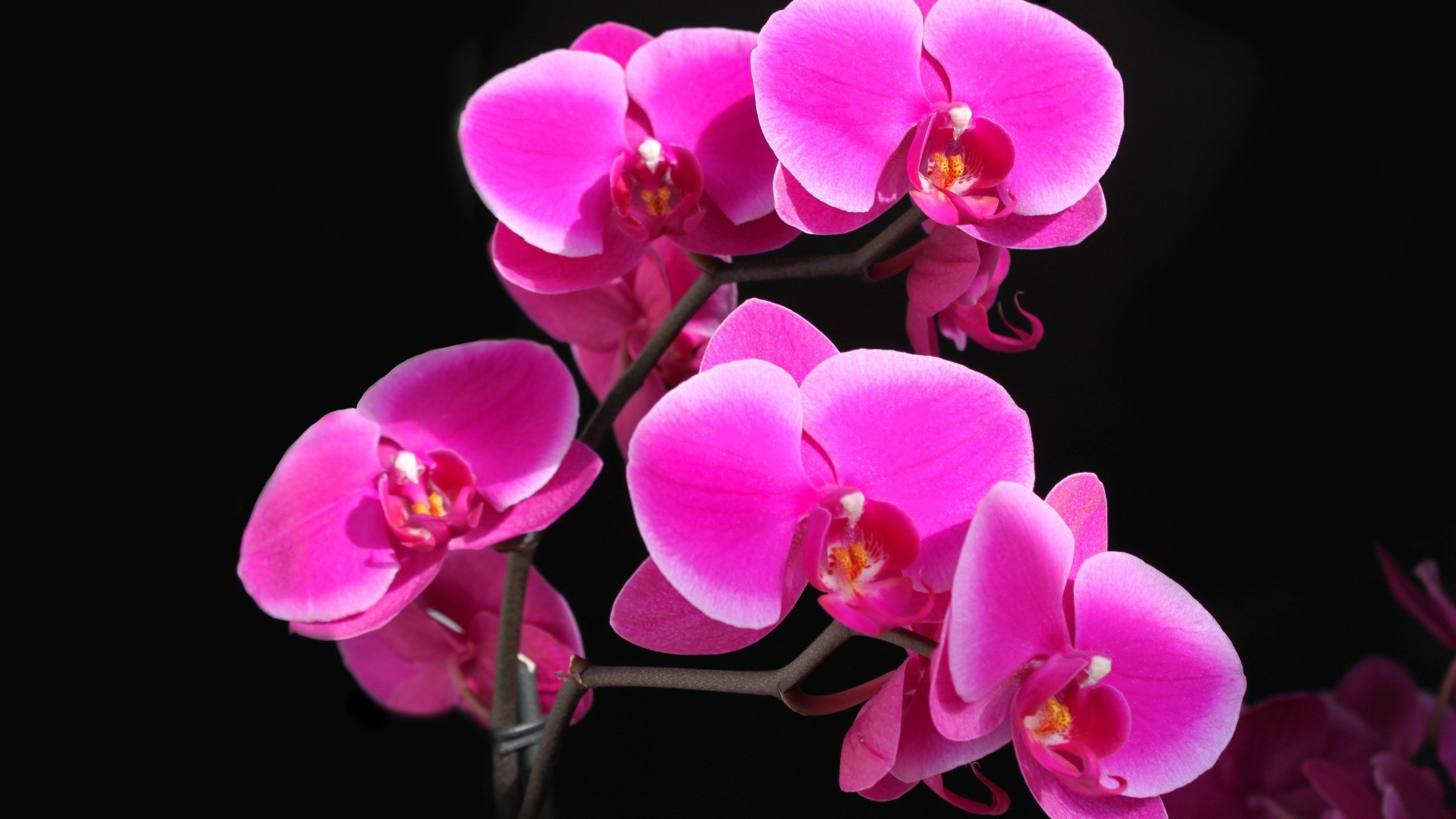 Wallpaper orchidee steine  Orchideen HD wall