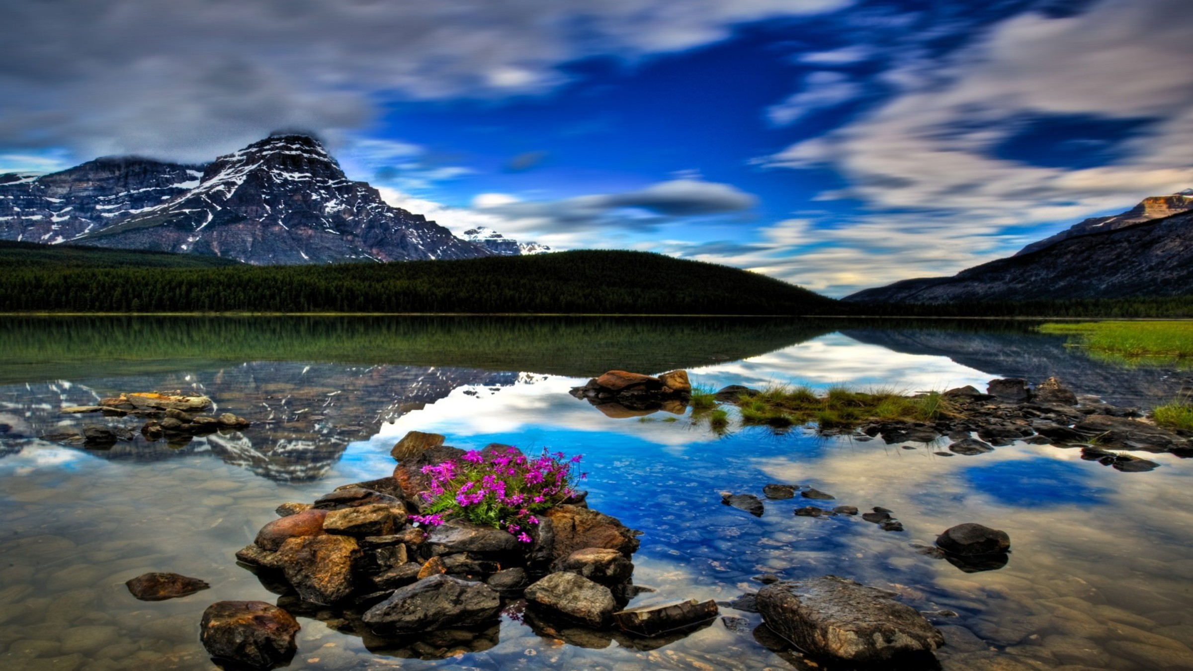 Bow Lake and Flowers, Banff National Park, Alberta, Canada  № 230838  скачать