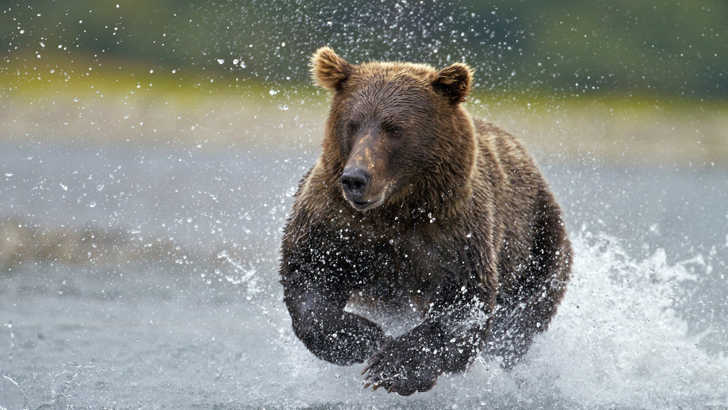 alaska fishing national park brown bear wallpaper | allwallpaper.in