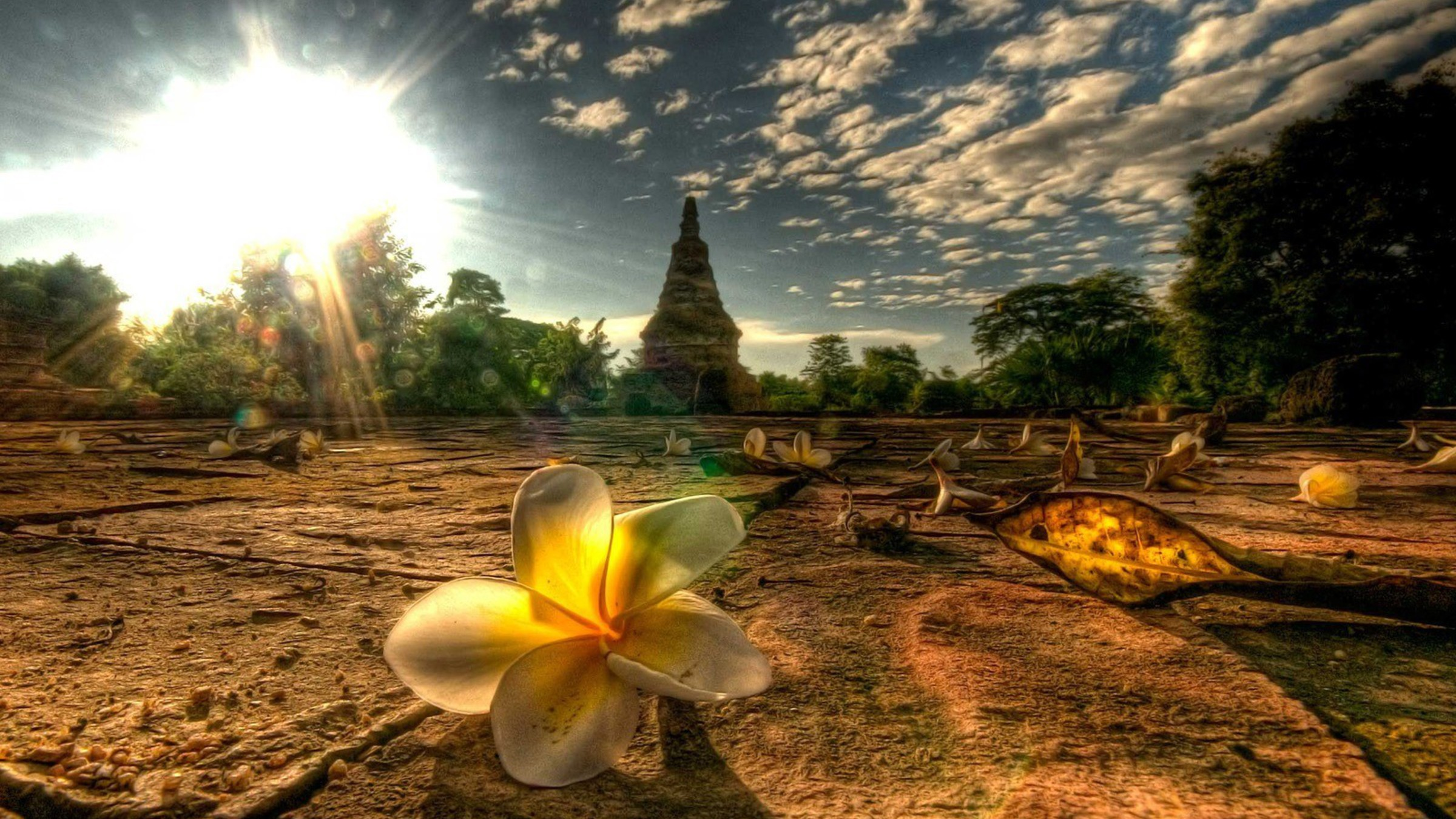 Fleurs paysages lumi re de la nature tha lande mai for Thai wallpaper gallery