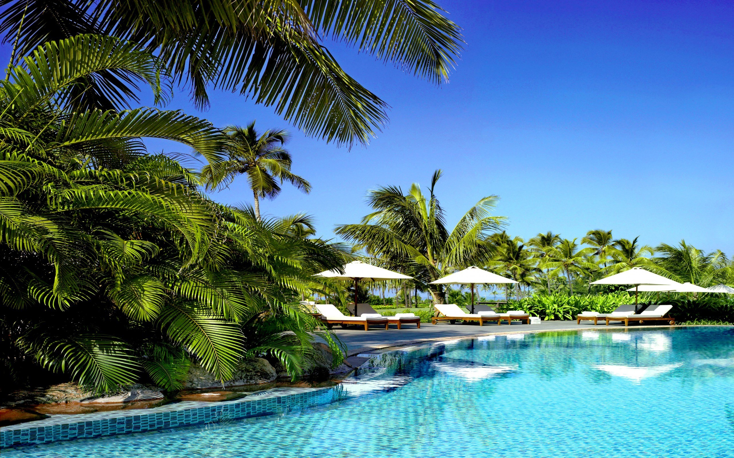 Palm trees swimming pools tropical wallpaper 10895 pc en for Best palm tree for swimming pool