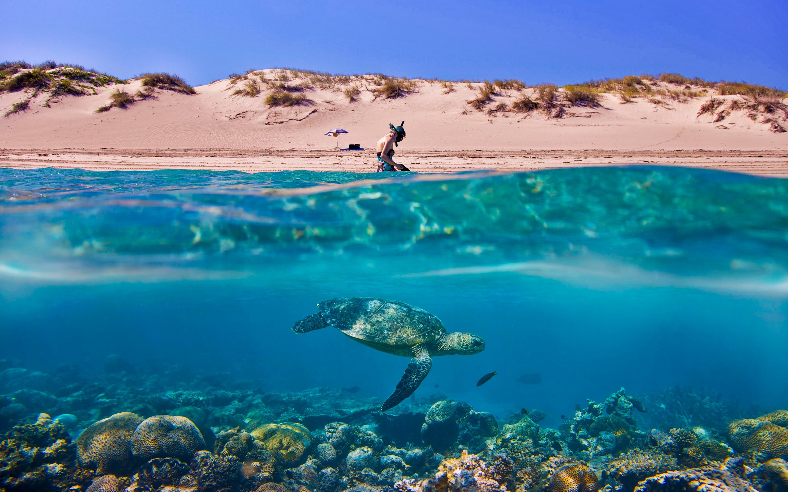 australia sand dunes umbrellas scuba diving split-view wallpaper