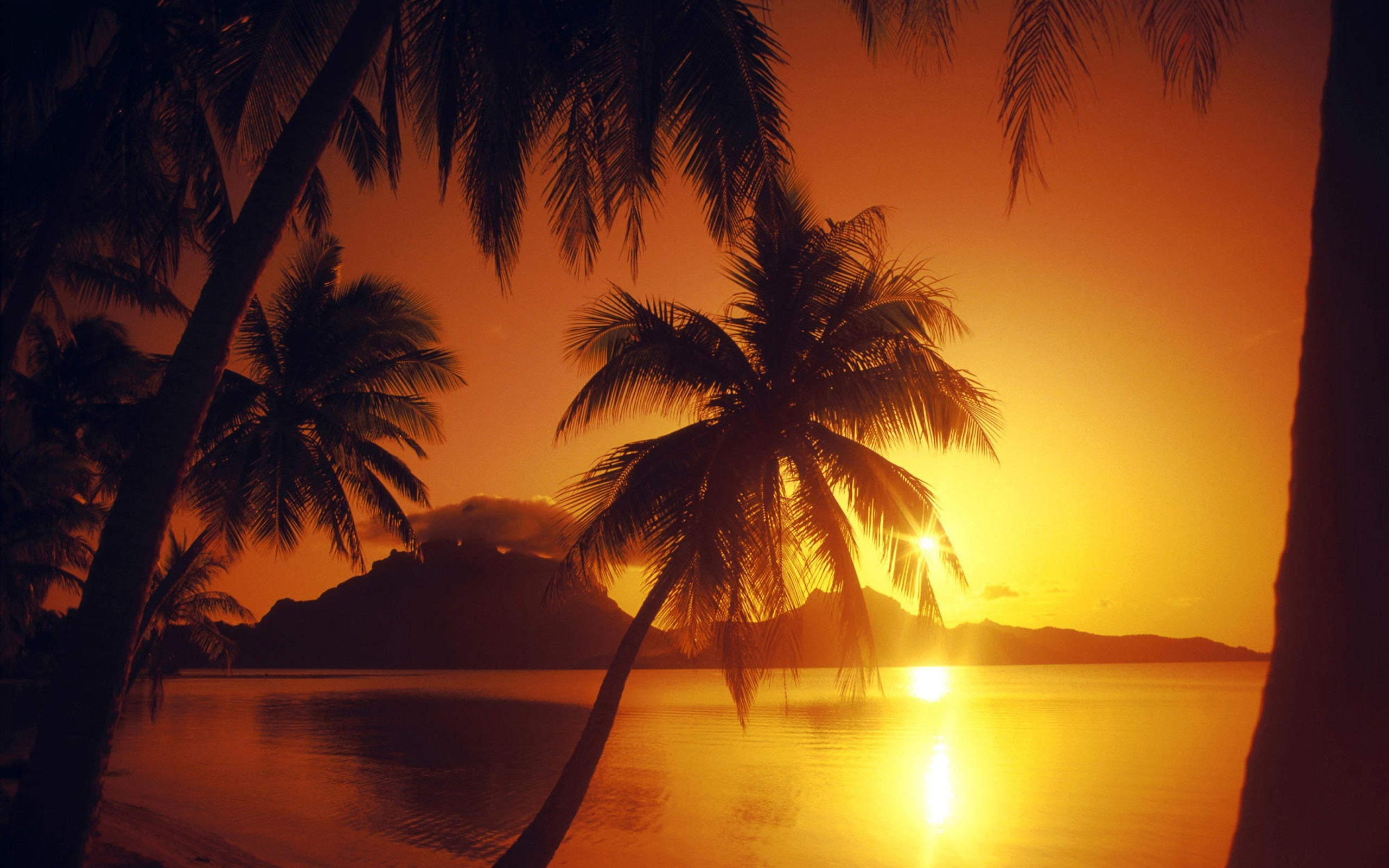 Beautiful Wallpaper Laptop Sunset - beaches-landscapes-nature-palm-trees-sunset-2560x1600-wallpaper  Best Photo Reference_2939.jpg