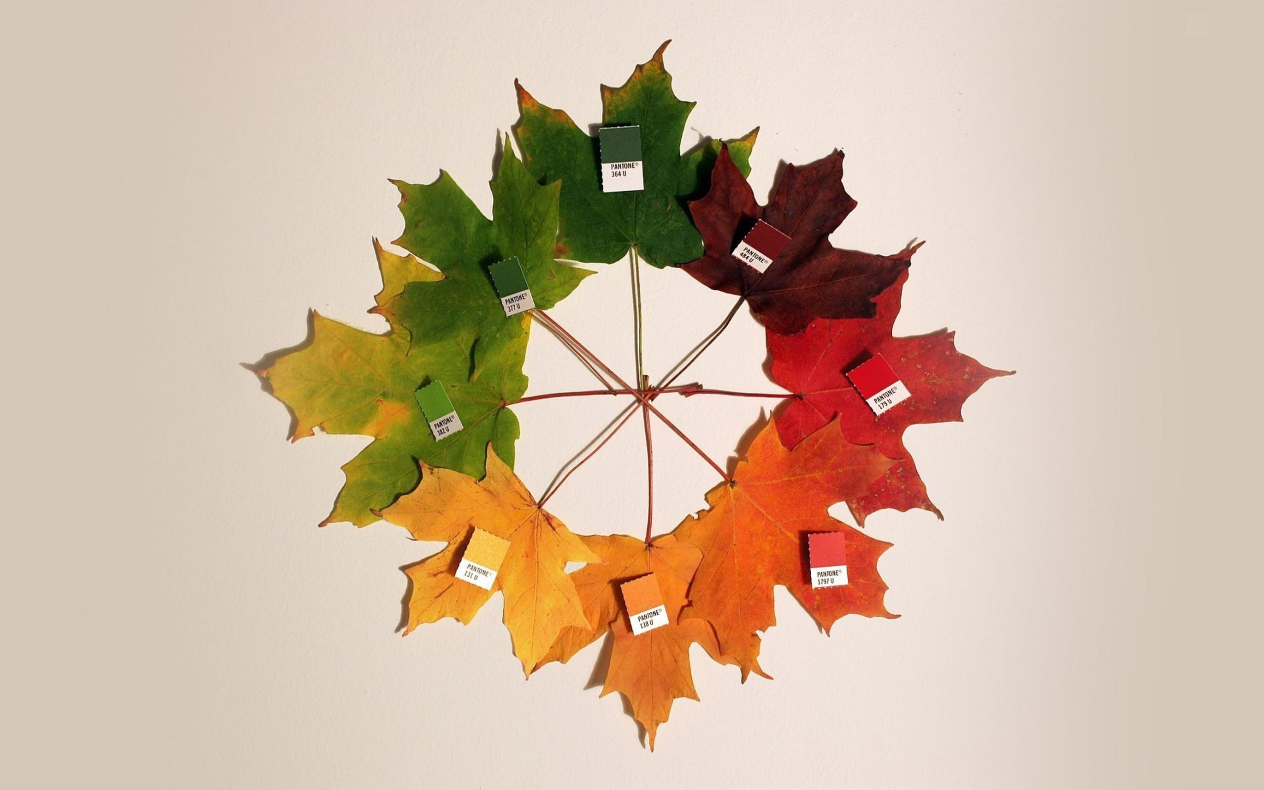 Colors Leaves White Background Wallpaper
