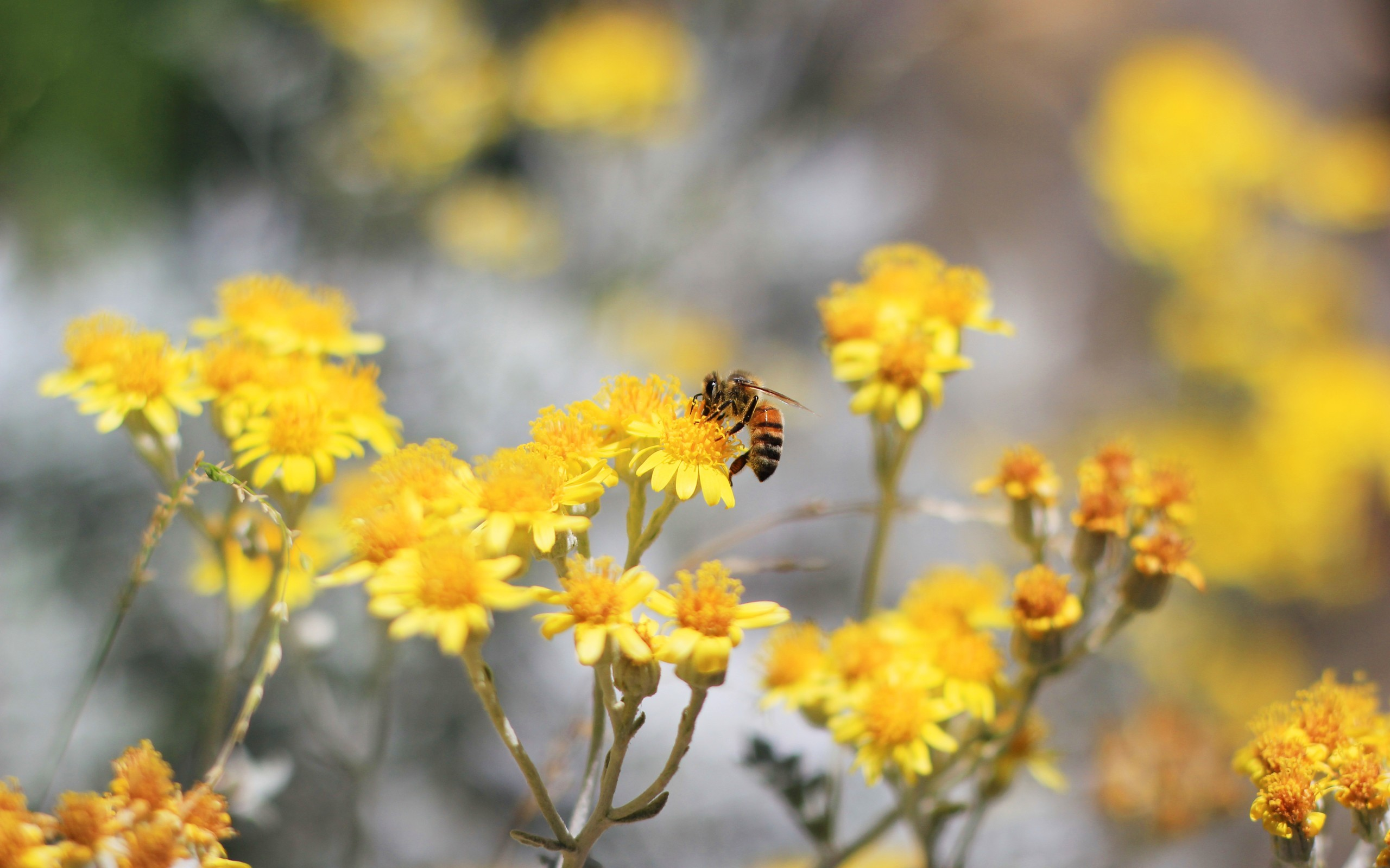 Nature Flowers Bees Yellow Wallpaper
