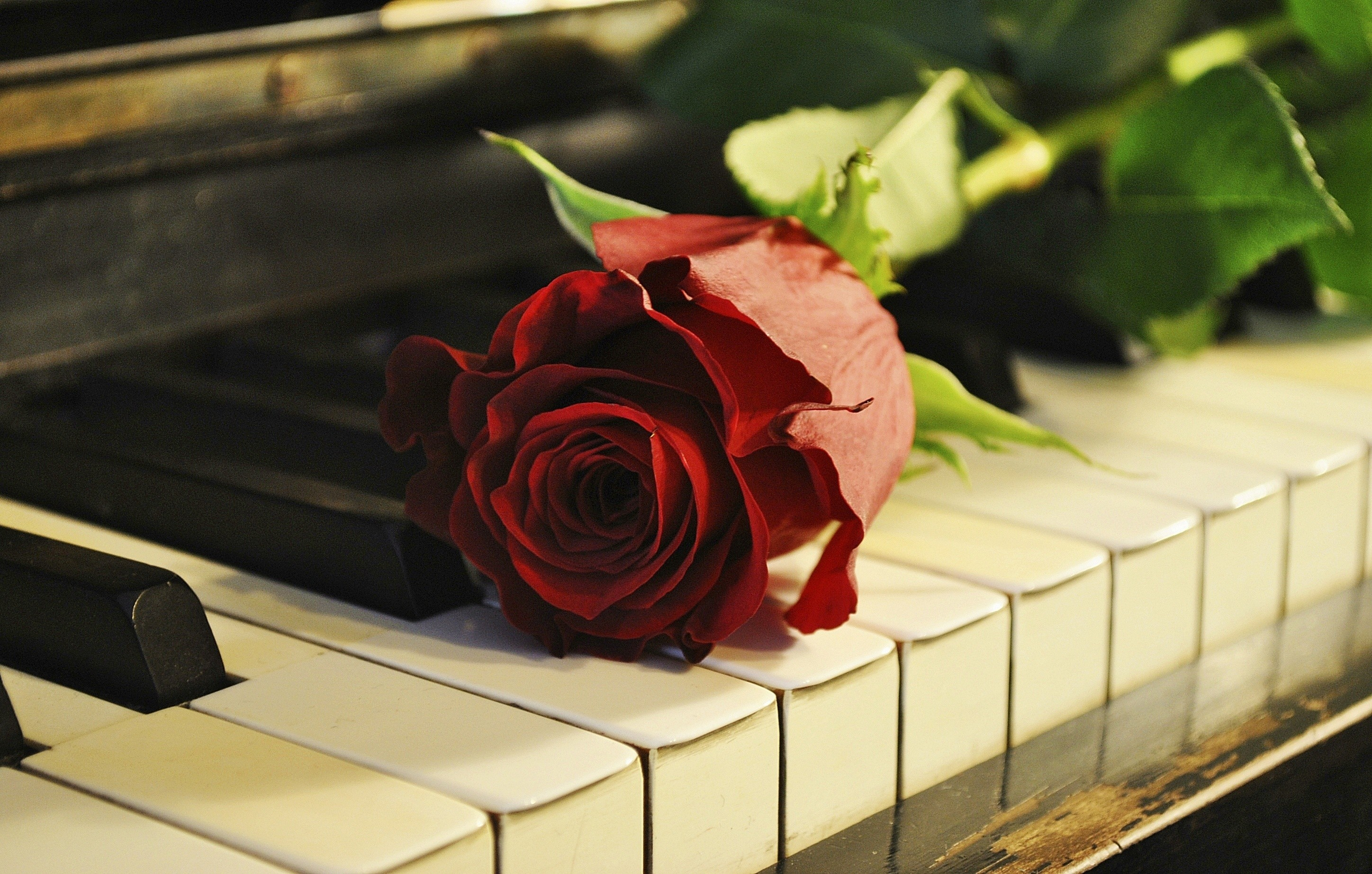 Rose On The Piano Wallpaper