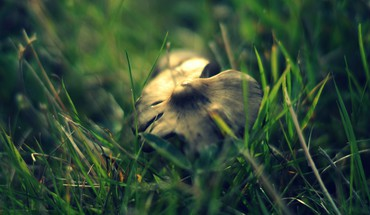 Nature grass mushrooms macro HD wallpaper
