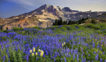Mount Rainier champs washington  HD wallpaper