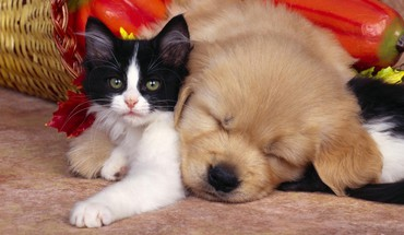 Animals cats cubs dogs friendship HD wallpaper