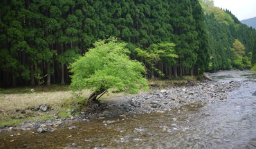 Trees rivers HD wallpaper