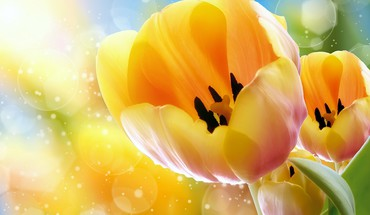 Nature yellow tulips HD wallpaper