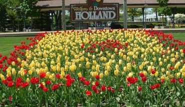 tulipes Urbains holland  HD wallpaper